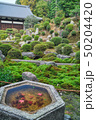 東福寺の日本庭園 50204420