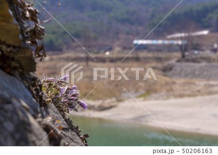 岩 石 グー 50206163