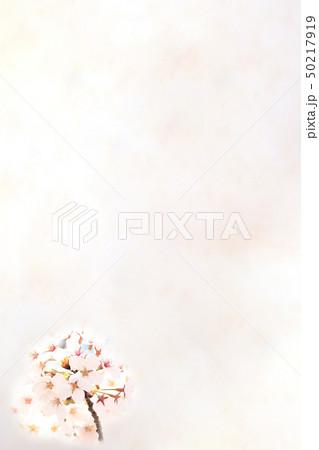 桜 ソメイヨシノ 春 イメージ 50217919
