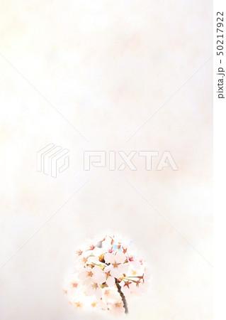 桜 ソメイヨシノ 春 イメージ 50217922