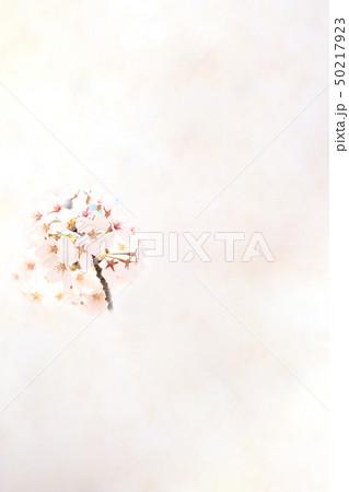 桜 ソメイヨシノ 春 イメージ 50217923