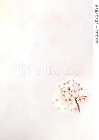 桜 ソメイヨシノ 春 イメージ 50217924