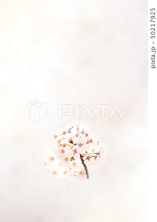 桜 ソメイヨシノ 春 イメージ 50217925