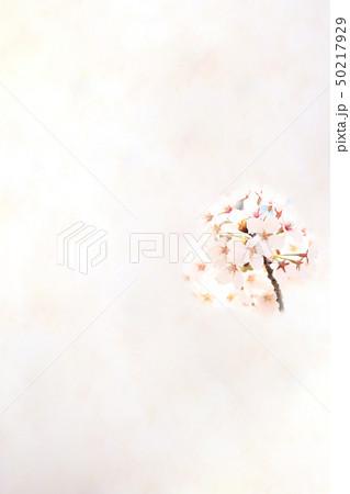 桜 ソメイヨシノ 春 イメージ 50217929