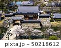 信州 長野県松本市、国宝松本城の太鼓門と桜と 50218612