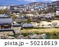 信州 長野県松本市、国宝松本城の桜と北アルプス 50218619