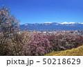 信州 長野県松本市弘法山の桜と北アルプス 50218629