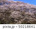 信州 長野県松本市弘法山の桜 50218641