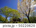 山桜と新緑 50220620