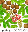 brazil nut pattern 50223553
