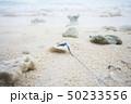 海 ビーチ 砂の写真 50233556