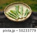 山菜食材、ウルイ(オオバギボウシの若芽) 50233779