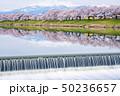 白石川 一目千本桜 桜の写真 50236657
