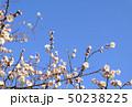 花 蕾 つぼみの写真 50238225