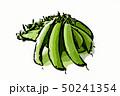 スナップエンドウ 豆 えんどう豆のイラスト 50241354