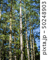 木立 木 杉の写真 50248903