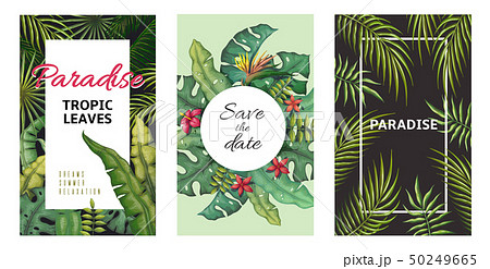 Tropical leaves posters. Jungle plants summer flyers, banana palm leaf pattern, foliage design 50249665