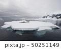 Crabeater seal resting on ice flow, Antarctica 50251149