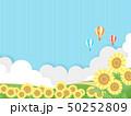 向日葵 50252809
