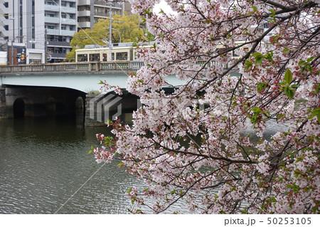 桜 50253105