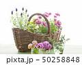 花とバスケット 50258848