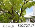 公園の木 50272717