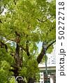 公園の木 2 50272718