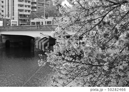 桜 50282466
