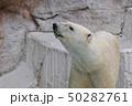 シロクマ 50282761