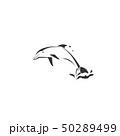 いるか イルカ 海豚のイラスト 50289499