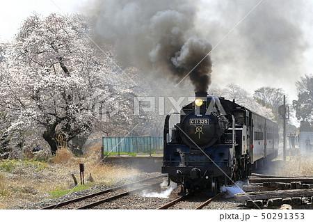 春の真岡鉄道SL 50291353