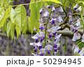 花 自然 植物の写真 50294945