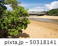 石垣島の吹通川の川辺 50318141