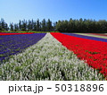 トリコロールのお花畑 50318896