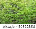 新緑 エコ 自然の写真 50322358