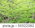 新緑 エコ 自然の写真 50322362