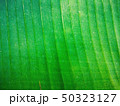 Green foliage texture design background  50323127