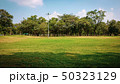 Public park with green grass , tropical tree   50323129