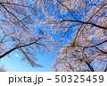 桜 春 ソメイヨシノの写真 50325459