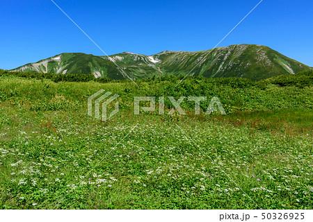 双六岳とお花畑 50326925