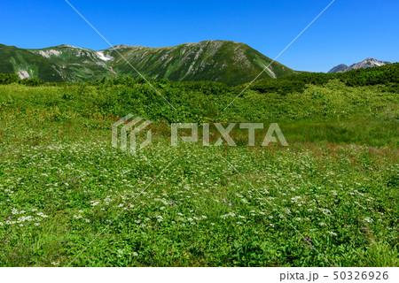 双六岳の稜線とお花畑 50326926
