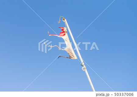 Torn national flag of Egypt is flapping in wind 50337006