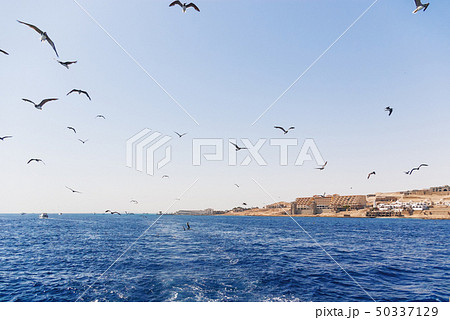 Seagulls are diving in water to catch food. 50337129