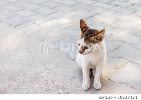 Stray three colored cat is sitting on pavement. 50337131