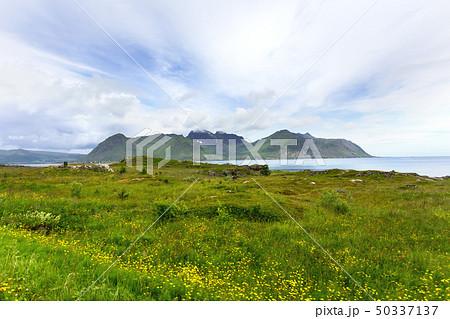 Norway scandinavian landscape with meadows 50337137