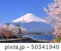 河口湖畔の桜と富士山-7707401 50341940
