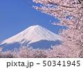 河口湖畔の桜と富士山-77086 50341945