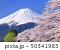 河口湖畔の桜と富士山-77008 50341983