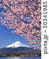 河口湖畔の桜と富士山-77014 50341985