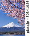 河口湖畔の桜と富士山-77015 50341986